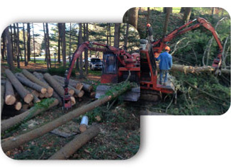 Property Clearing CT, Tree Cutting CT, Stump Removal CT, Property Clearing Services CT, Wood Chipping